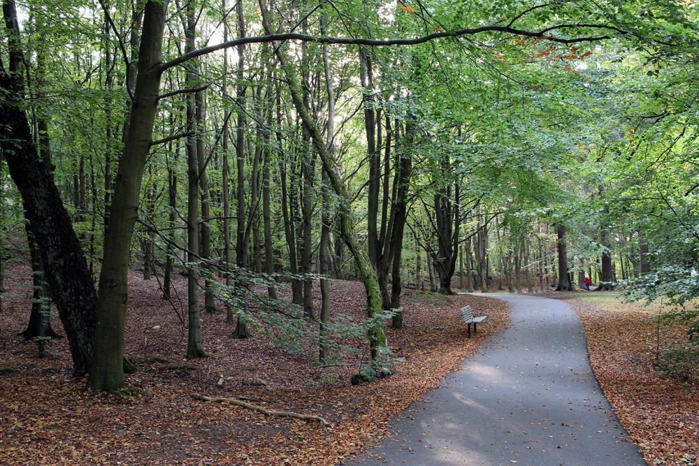 slottsskogen 024