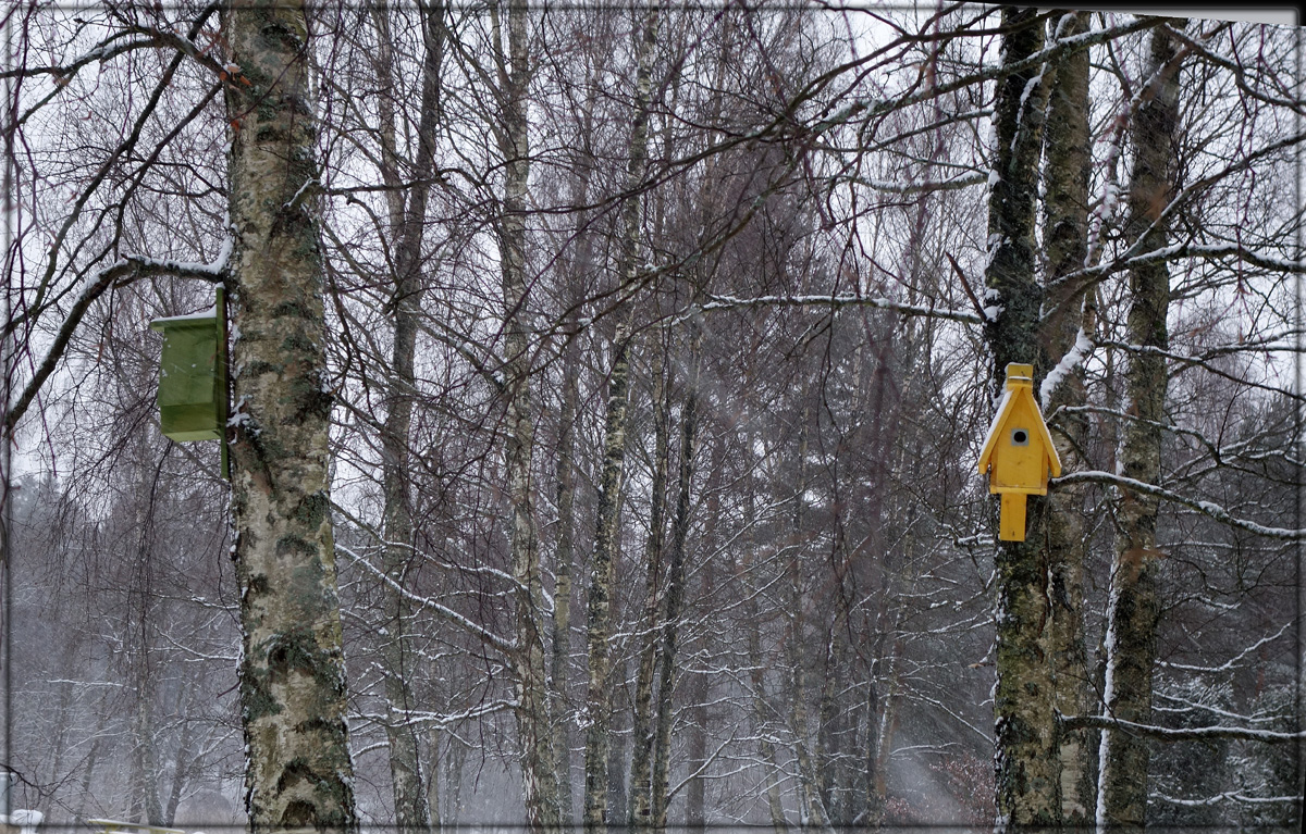 snö 010