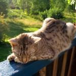 Hälsan viktigare än katten?