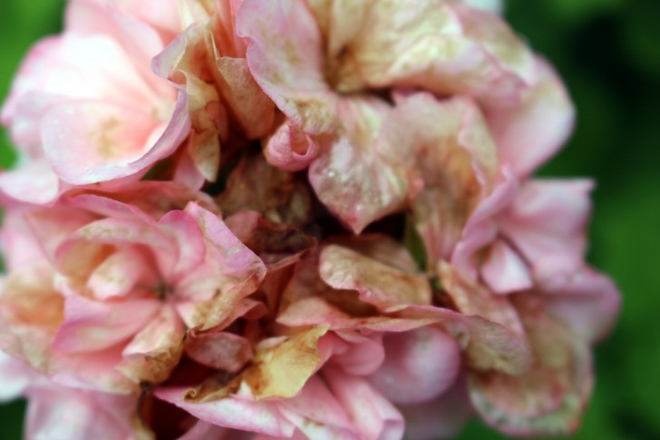 blommor 002