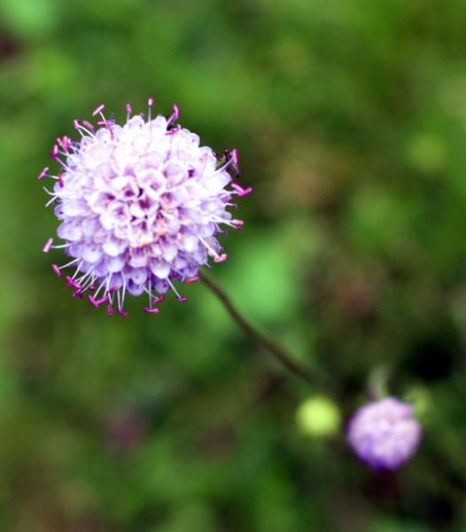 blommor 028