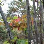 Hösten är här, bilder.