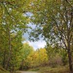 Innan löven faller, bilder.