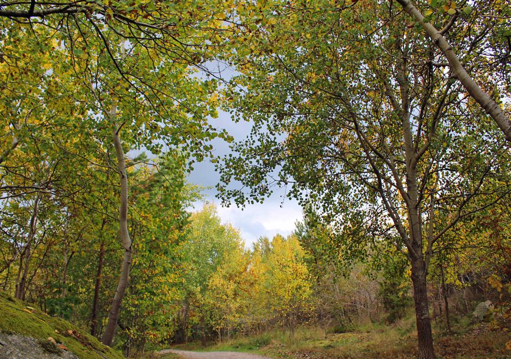skogen_ny