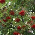 Botaniska trädgården i oktober, bilder.