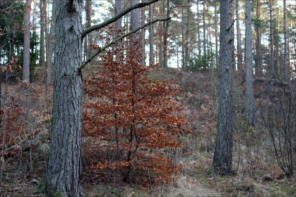löven2