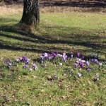 Har våren fått förhinder?