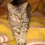 En katt bland hermeliner … #Blogg100