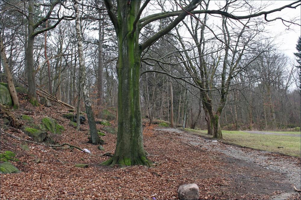 slottsskogen2