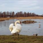 Hökälla våtmarkspark i Tuve, dagens bild.