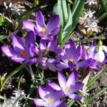 April, aprilväder och ljusets återkomst.