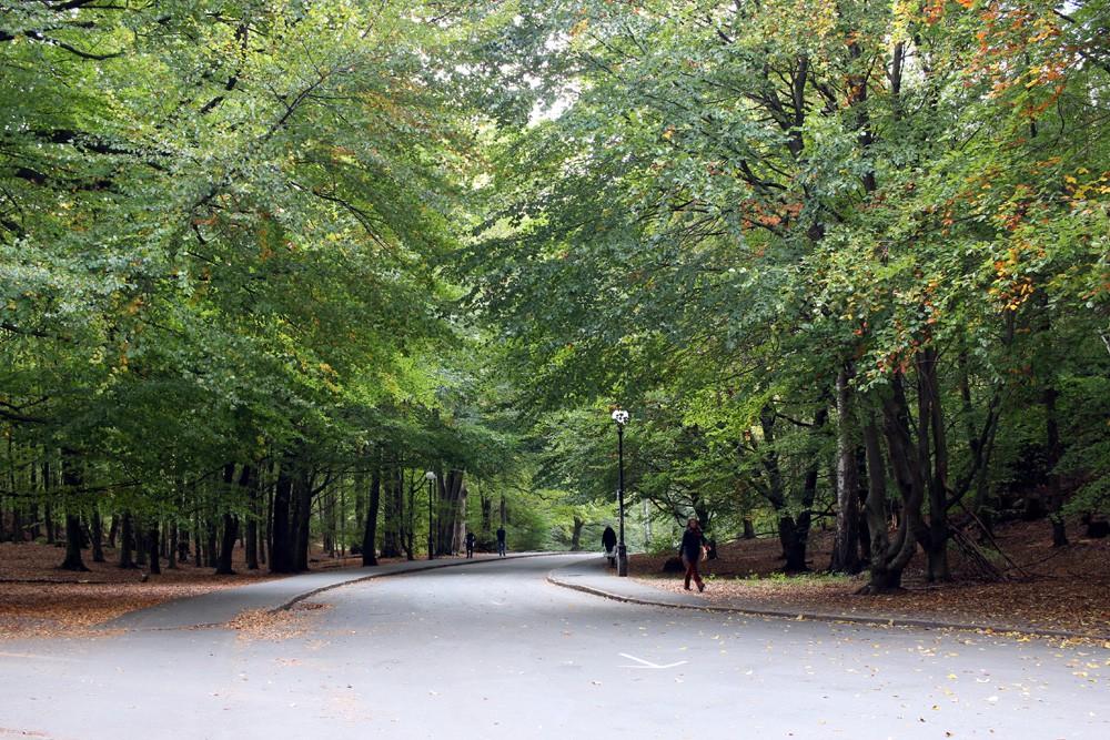 slottsskogen 020