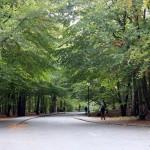 Slottsskogen om hösten, bilder.