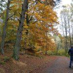 En cykeltur innan löven faller, bilder.