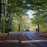 Slottskogen innan löven föll, bilder.