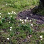 Vårtecken i Botaniska, bilder.