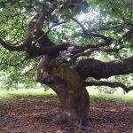 Höst i Botaniska trädgården del 1, bilder.