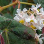 Vårdagjämning och vår på Botaniska, bilder