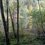 Höstserenad runt Slätta Damm, bilder