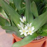Möter våren i Botaniska trädgården, bilder.