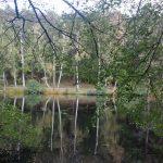 Slätta Damm innan löven faller trollbinder, bilder.
